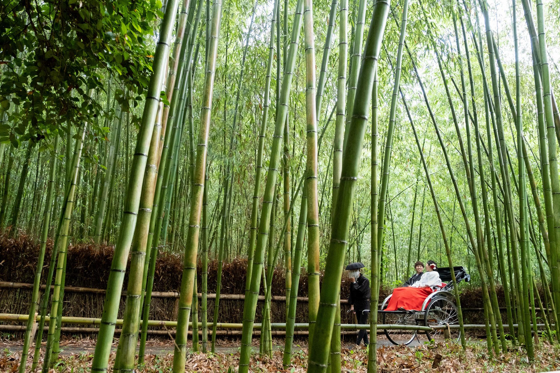 嵐山で人力車に乗って前撮り