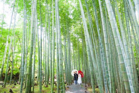 京都のお寺にある竹林スペースで前撮り