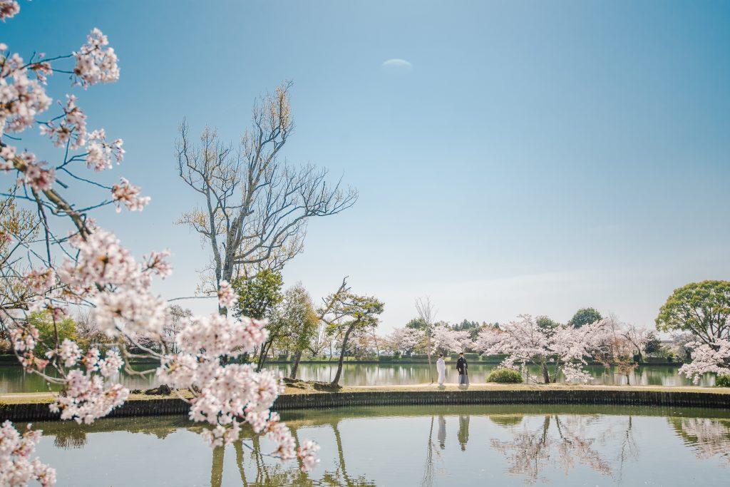 大覚寺と桜