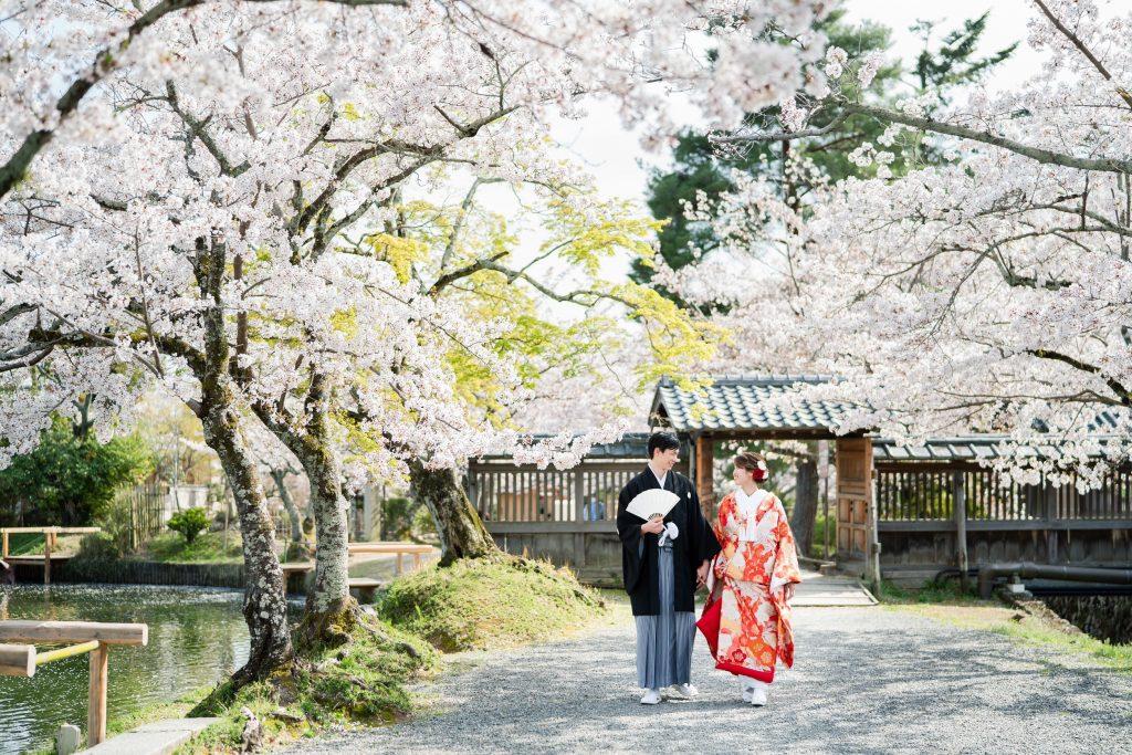 京都の大覚寺の桜