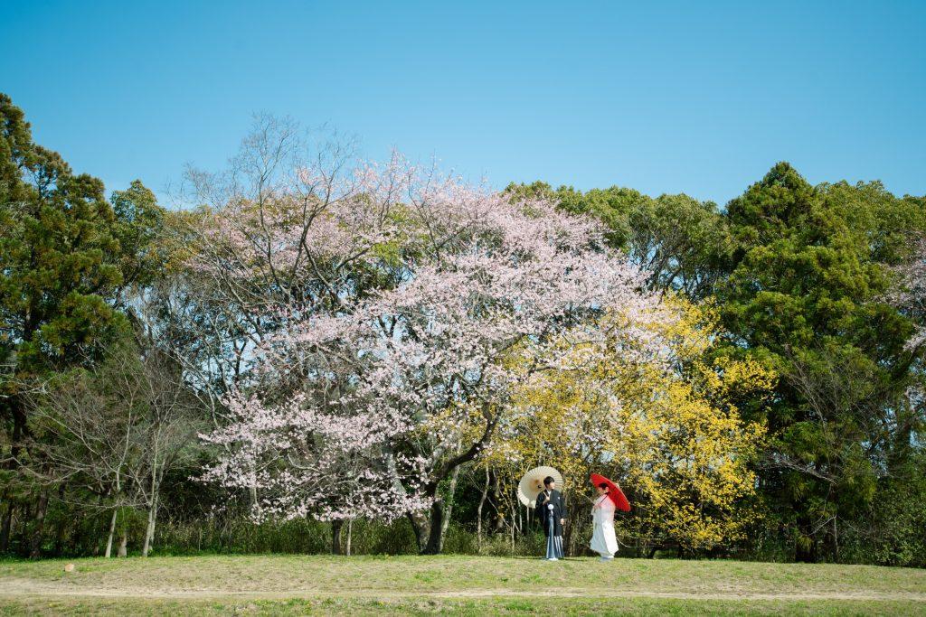 早咲きの桜(大覚寺)
