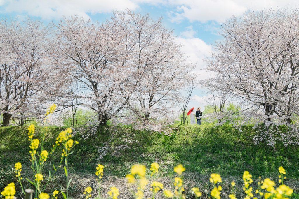京都の桜並木