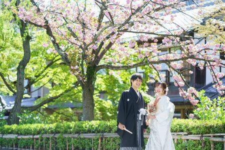 祇園白川の八重桜